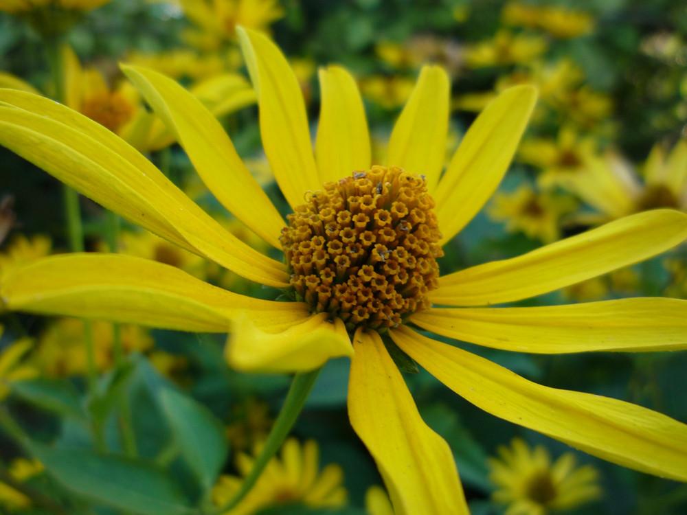 gelbe bl tenpflanzen foto bild pflanzen pilze. Black Bedroom Furniture Sets. Home Design Ideas