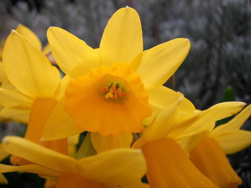 Gelbe Blume..