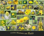 Gelbe Blumen (Blüten) am Rhein