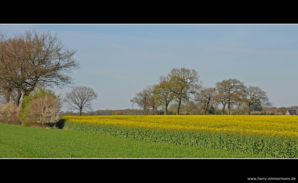 Gelbe Felder