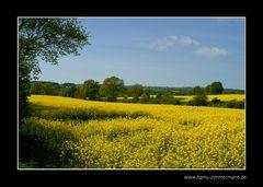 Gelbe Hügel