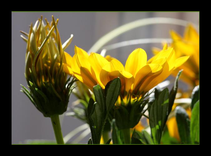 Gelbe Impressionen 2