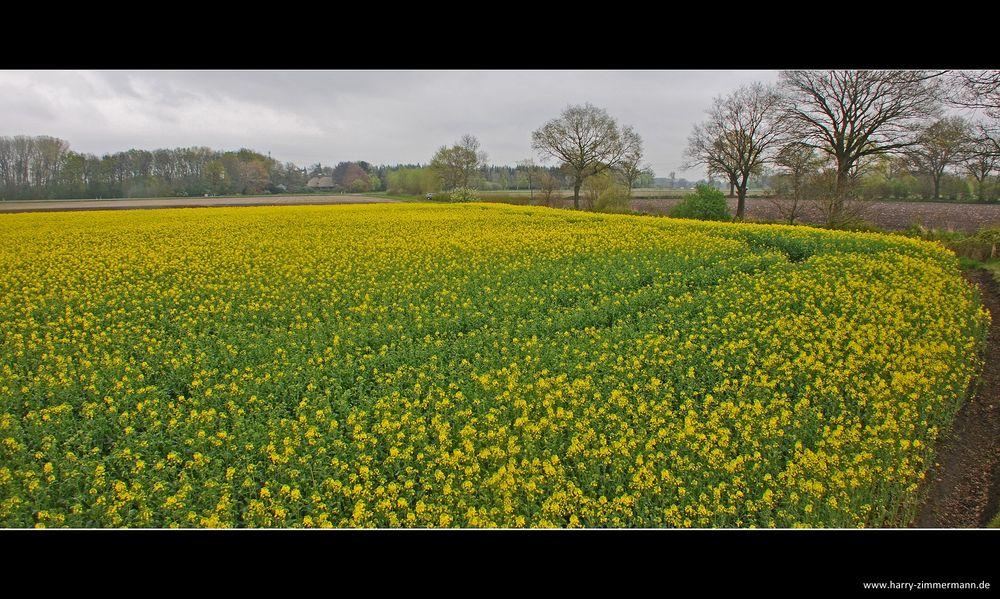 Gelbe Landschaften