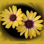 Gelbe Mittwochsblümchen...