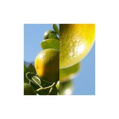 gelbe Orangen in nld