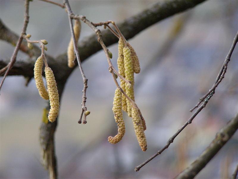 Gelbe Pflanze