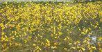 Gelbe Schläuche (Rekordhalter!)
