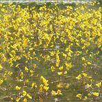 Gelbe Schläuche (Rekordhalter!) - reload aus 2008