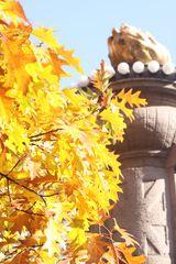 Gelbe Sumpfeichenblätter
