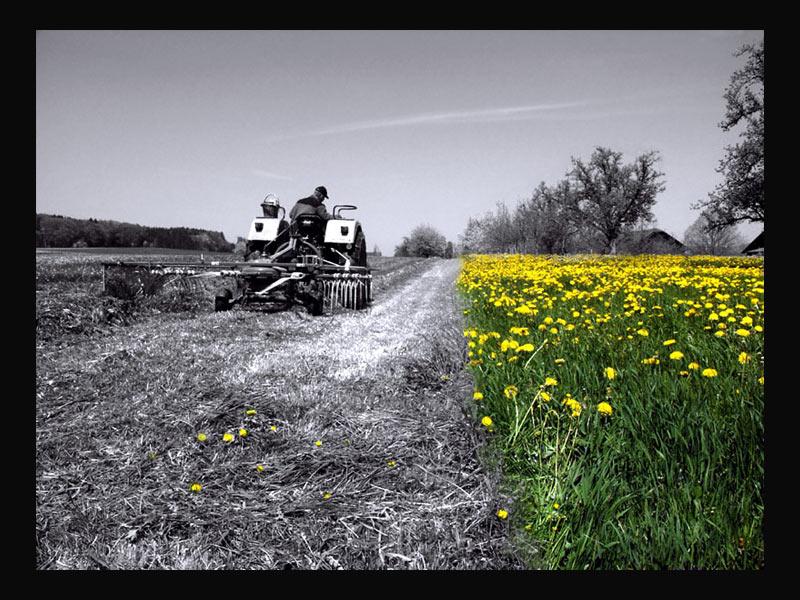 gelbe Wiese - ade von Heidi Zimmerli
