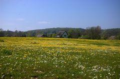 Gelbe Wiese in Kloster Hiddensee