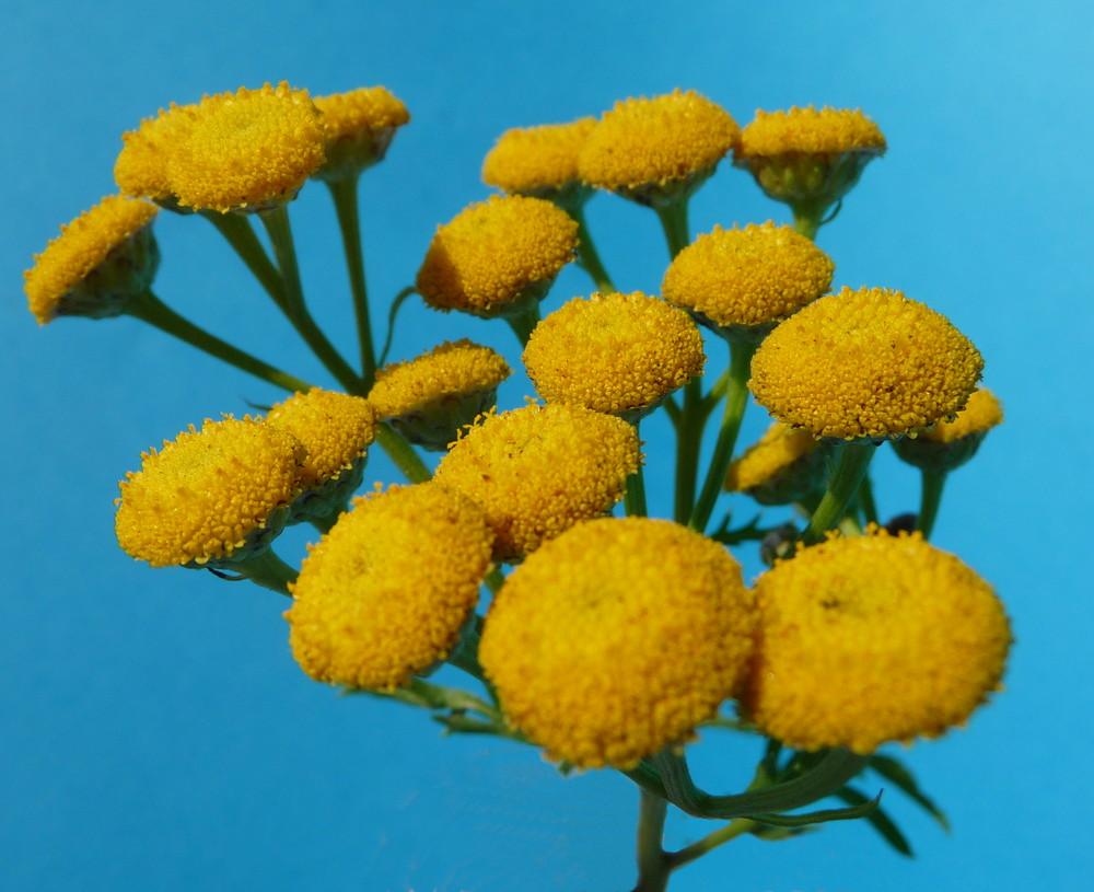 gelbe wiesenblumen foto bild pflanzen pilze. Black Bedroom Furniture Sets. Home Design Ideas