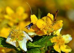 gelber Blütenzauber