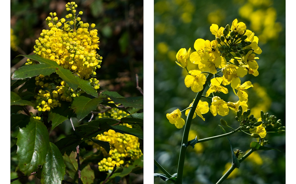 Gelber Frühling