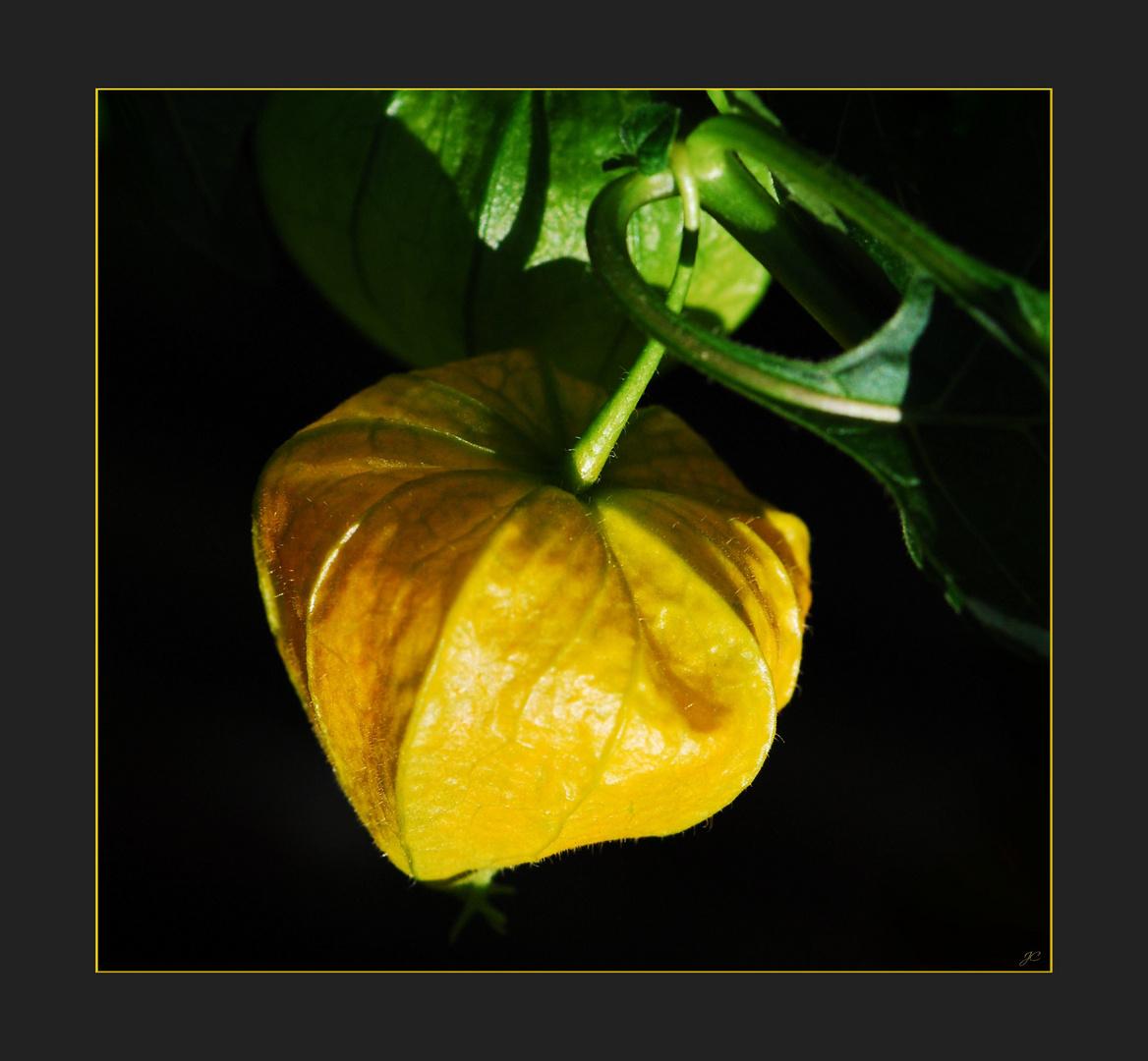 Gelber Lampion