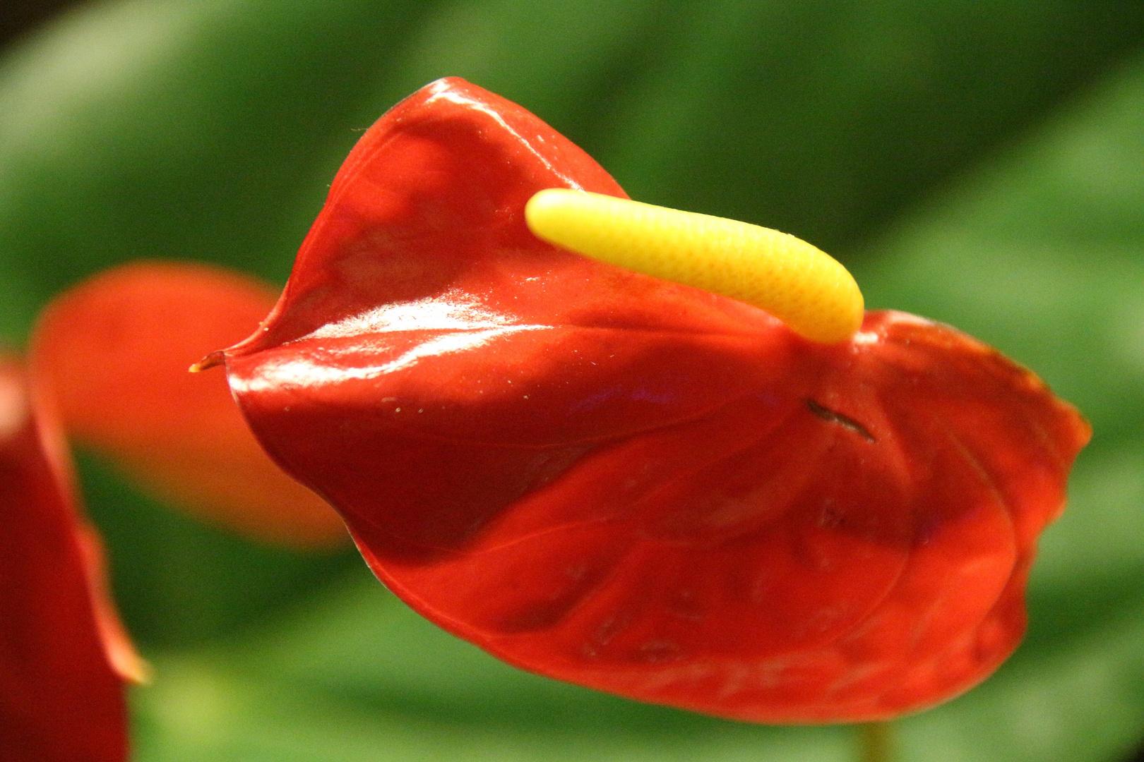 Gelber Pimmel Foto & Bild | makro, natur, blume Bilder auf