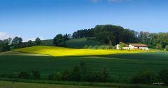 Gelber Teppich vor Bauernhof