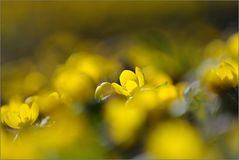 ~ gelber Wald ~