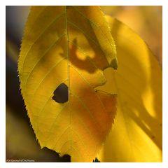 Gelbes Blatt mit Loch