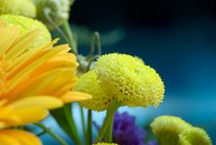 Gelbes Blümchen