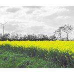 Gelbes Feld