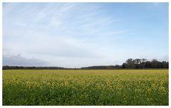 Gelbes Land