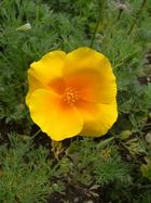 Gelbes Pflänzchen