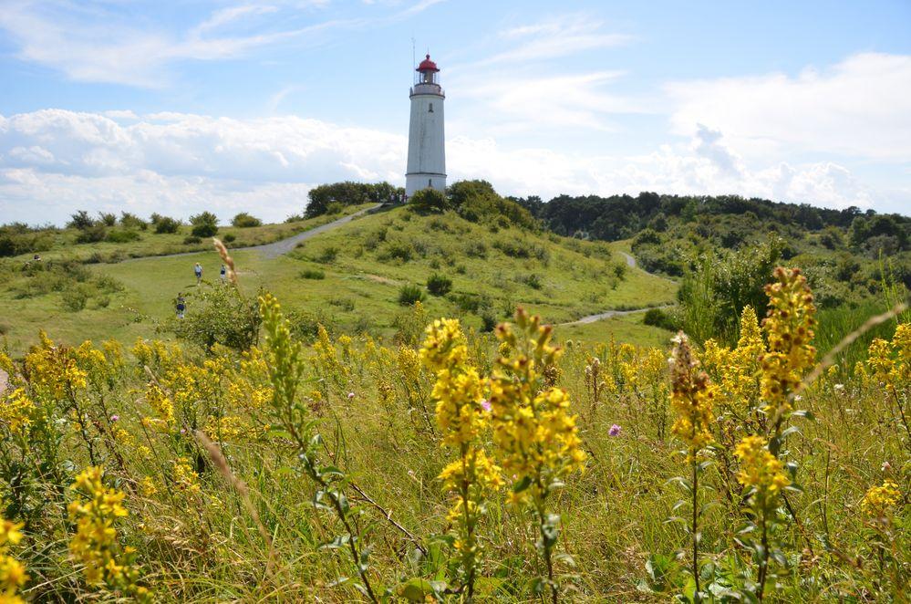 gelblicher farbenrausch am Leuchtturm Dornbusch