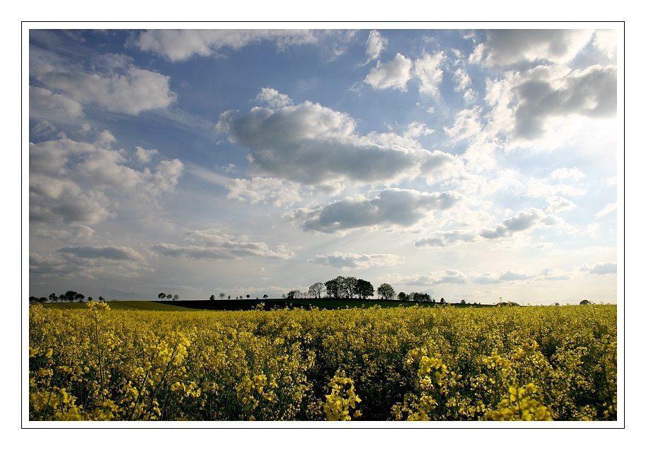 Gelb.....und am Himmel ein phantastisches Wolkenspiel