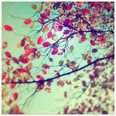 *** Geliebter Herbst ***