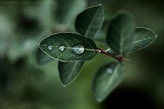 Geliebter Regen