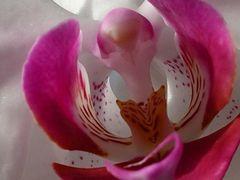 ??? ... gelöst! -> Orchidee