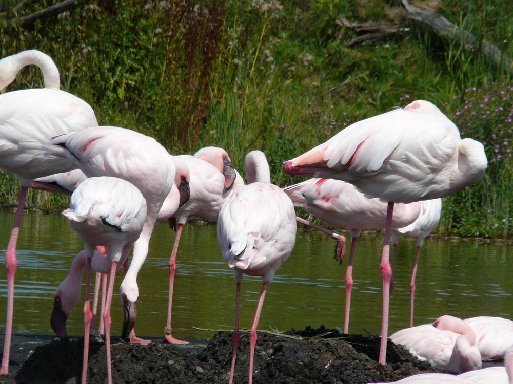 Gelsenkirchen Zoo