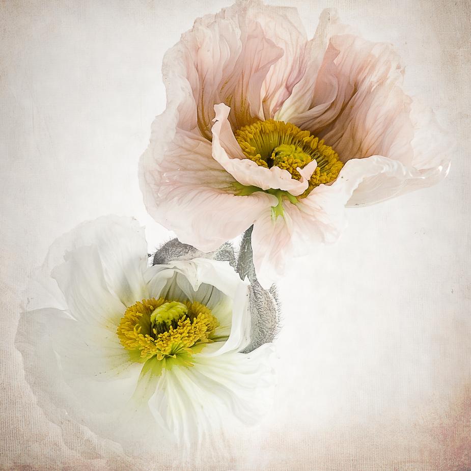gemalt mit licht foto bild pflanzen pilze flechten. Black Bedroom Furniture Sets. Home Design Ideas