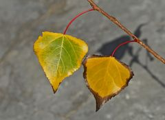 Gemeinsam alt werden ... - L'automne de la vie à deux ...