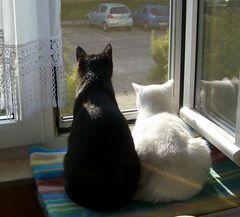 gemeinsam aus dem Fenster schaun , macht viel mehr Spass