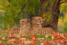 Gemeinsam die schönen Herbsttage genießen