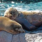 Gemeinsam einschlafen und träumen .....
