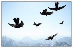 gemeinsam fliegen