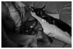 Gemeinsam schläft es sich ruhiger