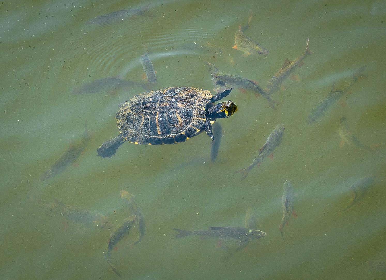 Gemeinsam Schwimmen ist doch schöner!