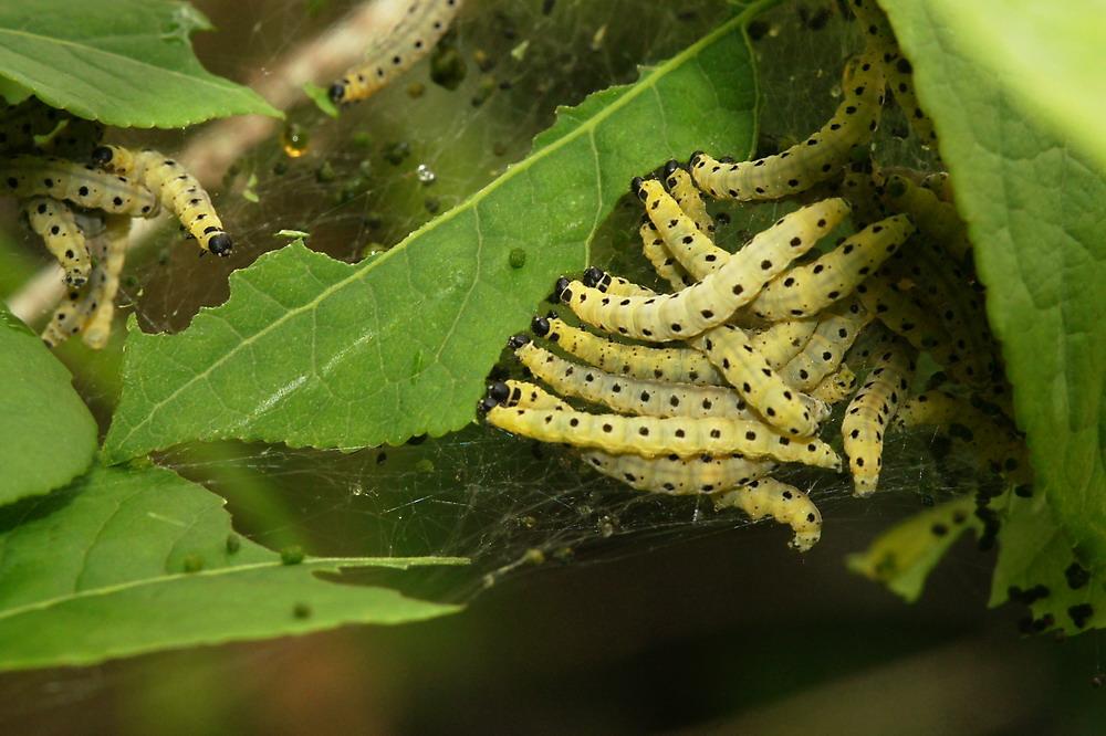gemeinsam sind wir stark foto bild tiere wildlife insekten bilder auf fotocommunity. Black Bedroom Furniture Sets. Home Design Ideas