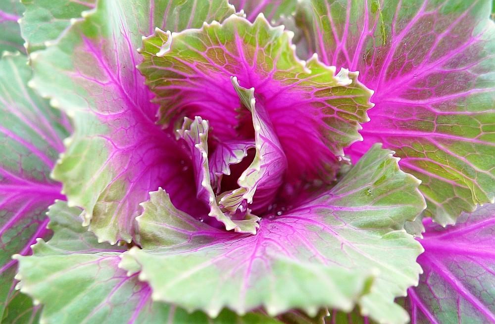 Gemüse als Zierde