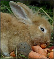 ... Gemüse ist gesund ...