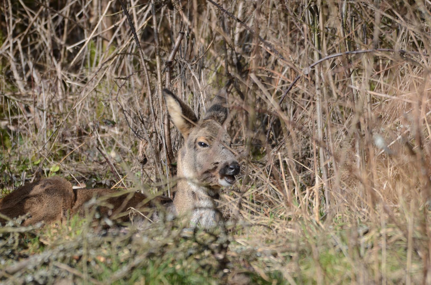 Gemütlich In Der Sonne Liegen Foto Bild Tiere Wildlife