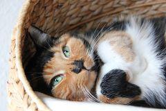 Gemütliche Katze...