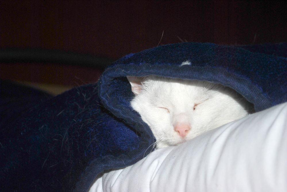 gemütlicher Schlafplatz