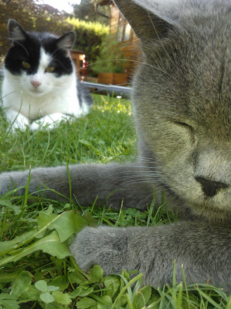 Gemütliches Katzentreffen