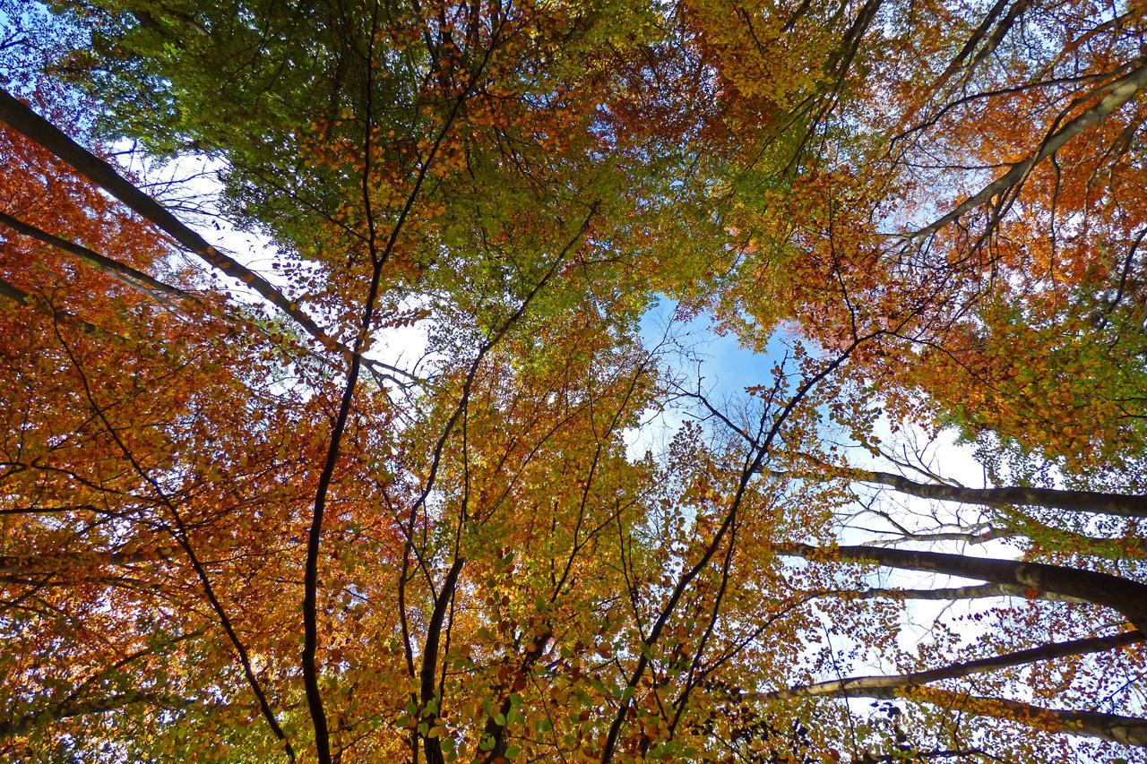 ...gen Himmel blicken und den Wald geniesen...
