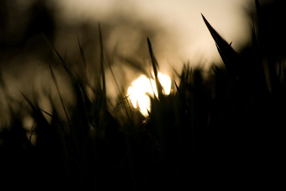 Gen Sonne am Abend